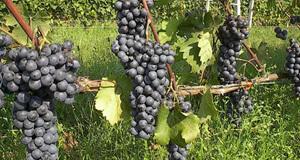 Wine-tasting-DAY4