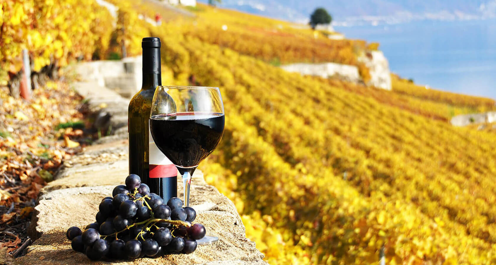 Wine-tours-Greece-h900